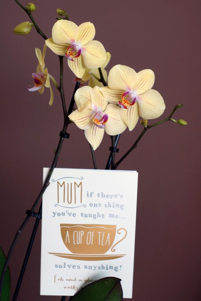 Hello Freckles Sunday Summary Mother's Day Orchid