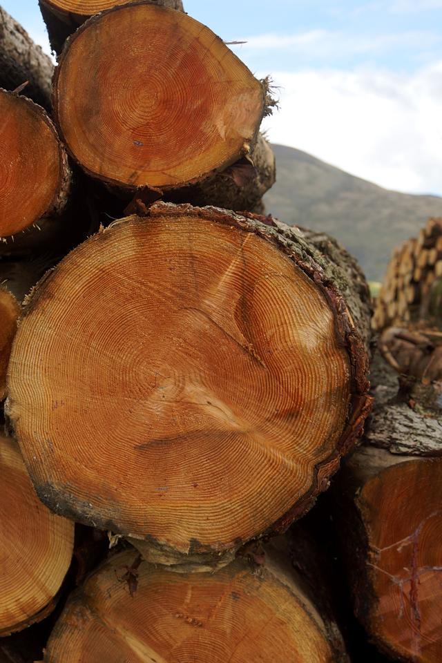 Keswick Derwentwater Hello Freckles Lake District Trees