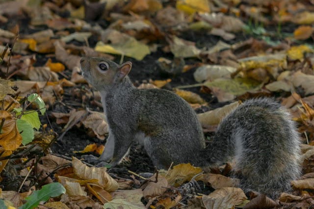 Hello Freckles Autumnal Outfit Squirrel